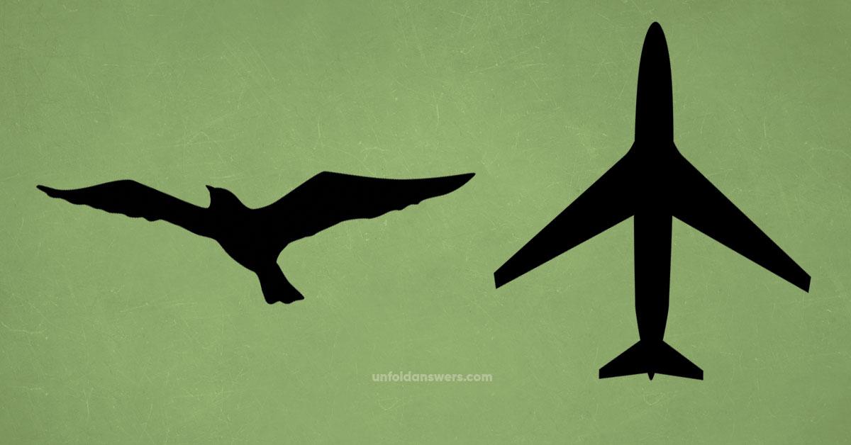 Birds and Aircraft