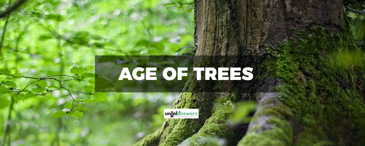 Age of Trees