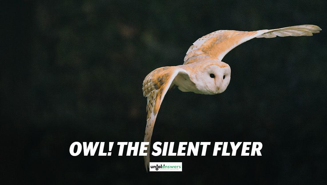 Silent Flight of Owl